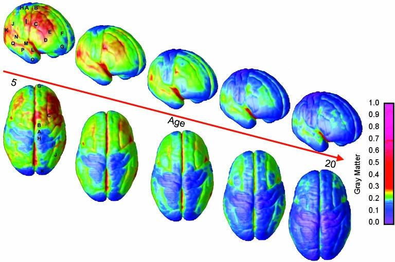 comportement et cerveau